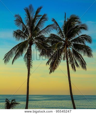 Palm treesl on the beach. Delicate sunset on the popular resort island of Koh Samui