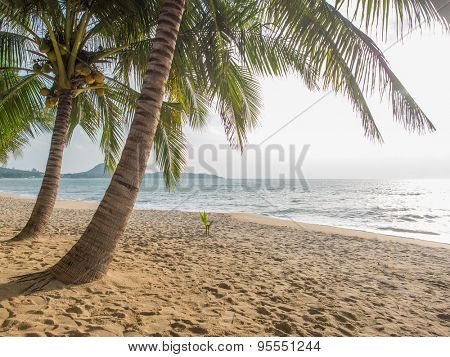 beach with sea and coconut palm tree