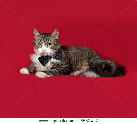 Fluffy Tabby And White Cat In Bow Tie Lying On Red