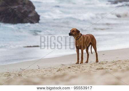Worried Puppy
