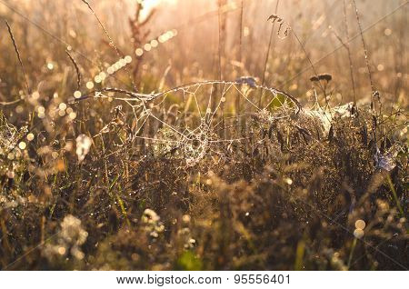 Dewy Spiderwed And Autumn Grass Background