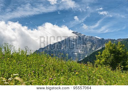 Close up of overgrown grassy meadow with mountain vista in backdrop beneath blue sky and white clouds