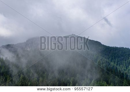 Expanse of fir trees beneath cloudy sky, view obscured by white mist