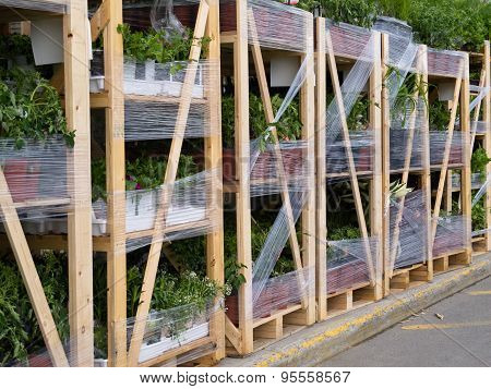 Gardening Plant Supply Pallets For Garden Center Sale