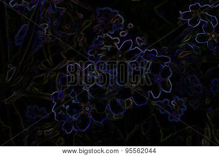 Black Background With Abstract Flowers