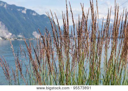 View On Mountains And Lake Geneva