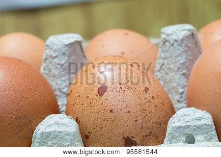 Brown Chicken Eggs Macro