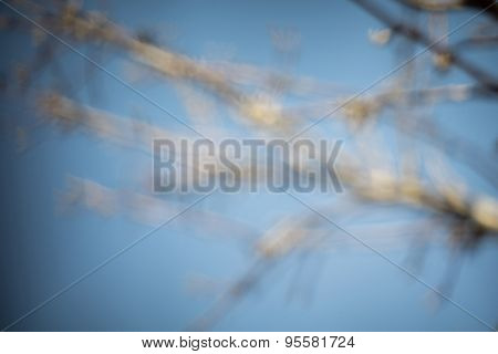 Buds On Branches
