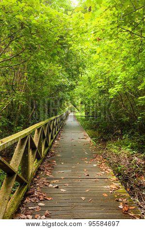 Boardwalk in dense rainforest