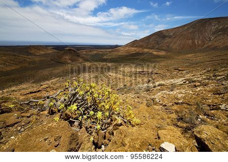 In Los Volcanes Volcanic Plant Flower Bush