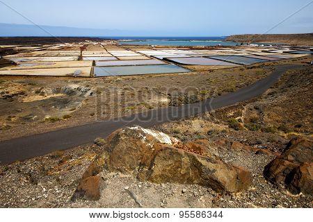 Salt In  Lanzarote Spain Musk P