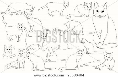 Set cats isolated on a white background vector