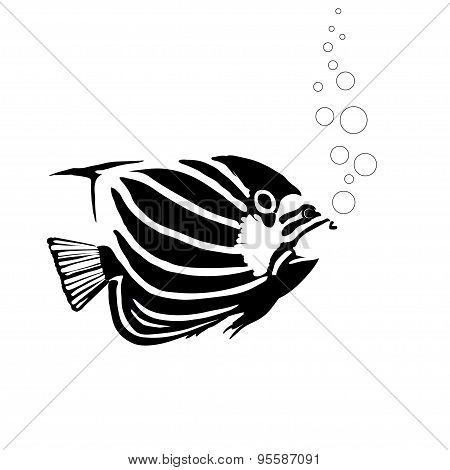 Monochrome Coral Angelfish