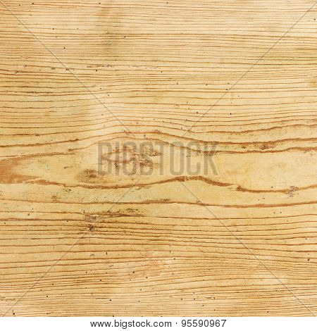 Old Spruce Wood Board With Wormholes