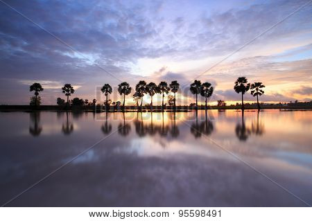 Colorful sunrise landscape with silhouettes of palm trees on Chau Doc city, Vietnam. Chaudoc city ne