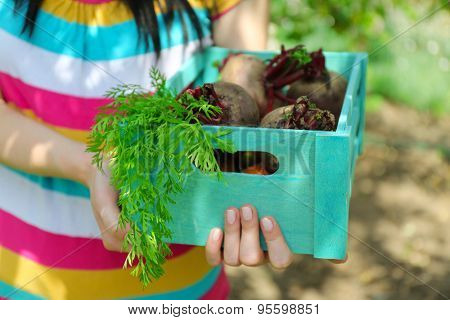 Female hands holding wooden crate with fresh new vegetables in garden