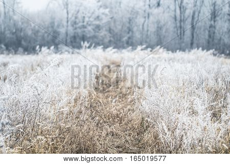 Beautiful winter background forest and field frozen under the snow and frost