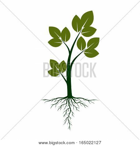 Shape of green Tree with Roots. Vector Illustration.