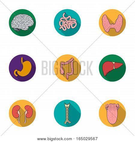 Human organs set icons in flat design. Big collection of human organs vector symbol stock illustration