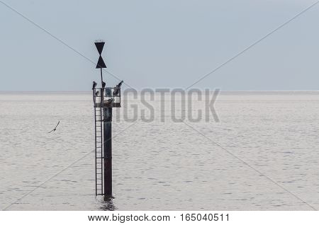Birds perch on a marker just off the coast of an Australian beach during the summer.