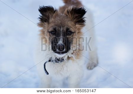 small dog in the snow puppy in the snow. little dog in the winter time