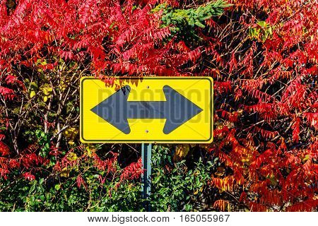 Road sign showing two directions with colorful fall trees.