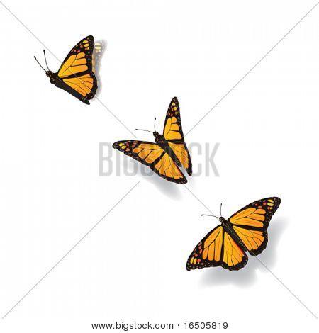 mariposa en movimiento