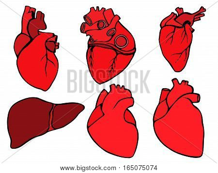 Human hearts icon and liver, cartoon style