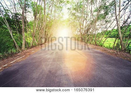 Country Asphalt Road With Tree And Sunset Flare. Vintage Filtered.