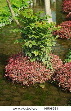 Pflanzen in einem Bach
