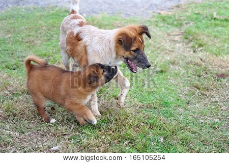 Young Puppies On Country Field At Night