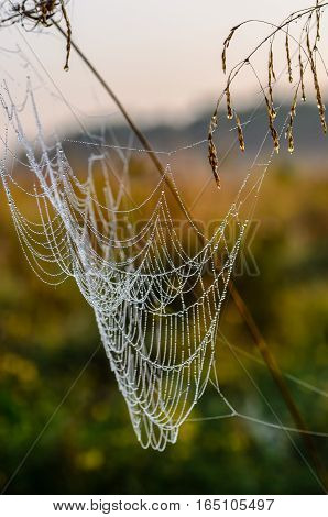 Drops of dew on a spider web in the morning at dawn