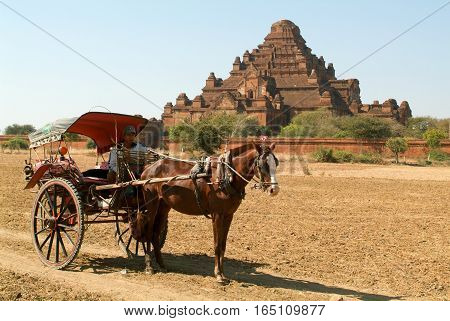 Bagan Myanmar 24 January 2010: Man on hourse-drawn carriage in front of Dhammayangyi temple at the archaeological site of Bagan on Myanmar
