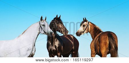 Grupovoy portrait horses on a background of blue sky. Black, white and brown horse standing nearby.