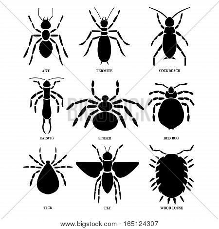 Insects. File have two layers, text, and insects.