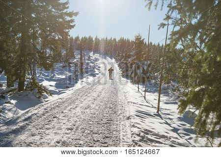 Skier on the way up in the winter forest