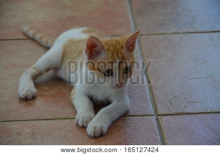 Cat White Golden Alone Look Away Small