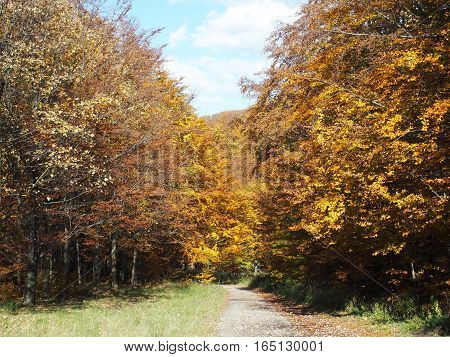 Forest path with colorful trees and green glade in Beskid Mountains near city of BIELSKO-BIALA in POLAND with cloudy blue sky in warm sunny autumn day, SILESIAN PROVINCE, EUROPE, OCTOBER.