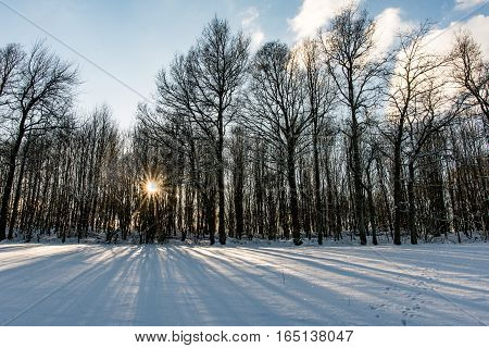 Warm sun rays between trees and snowy landscape