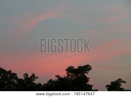 Pastel Pink and Blue Evening Sky over the Silhouette of Big Trees in City Center Public Park