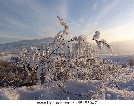 Hoarfrost on a branch, winter evening, winter landscape