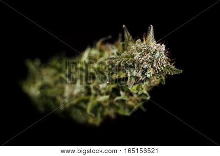 Focused flower of medical weed with resin