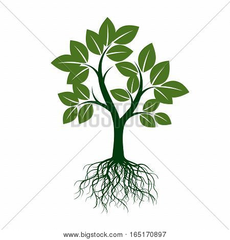 Green Tree with Roots. Vector Illustration and graphic element.