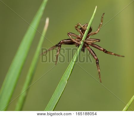 Spider Hangs On Blade