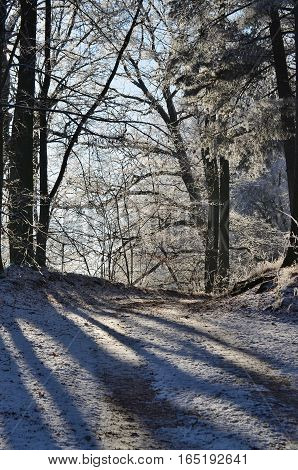forest road at the end of winter. South Bohemia