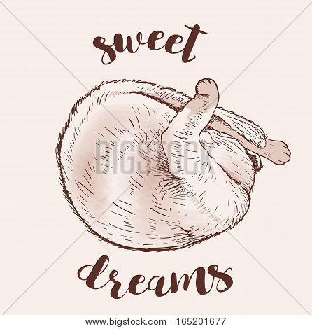 Cute sleeping cat. Hand drawn vector illustration.