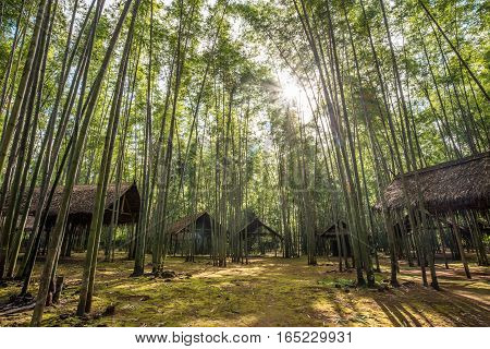 The bamboo forest in the local village of Inle lake, Myanmar.