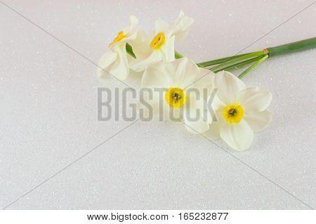 Narcissus Flowers Bouquet On White Background