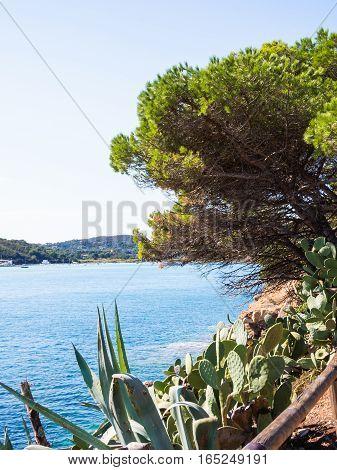 Prickly pear trees overlooking the blue sea of the Tuscan Archipelago - Porto Azzurro