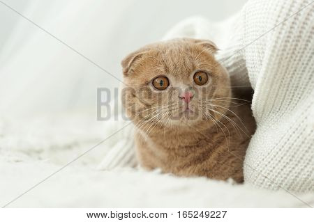 Cat Comfortably Settled On Bed